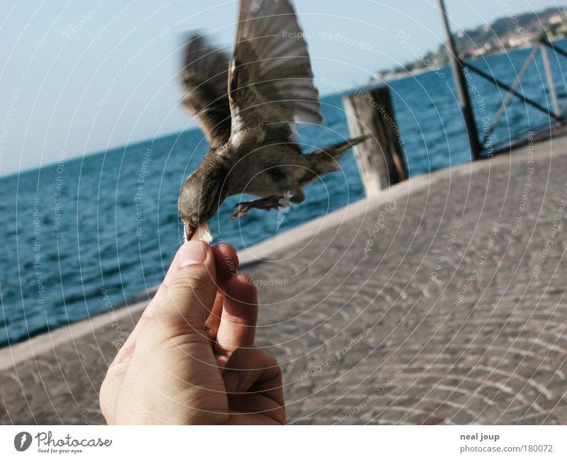 Lieber den Spatz in der Hand ... Sommer Freude Tier Erholung fliegen Freizeit & Hobby Geschwindigkeit Europa niedlich Italien Seeufer Lebensfreude Dienstleistungsgewerbe Fressen frech Leichtigkeit
