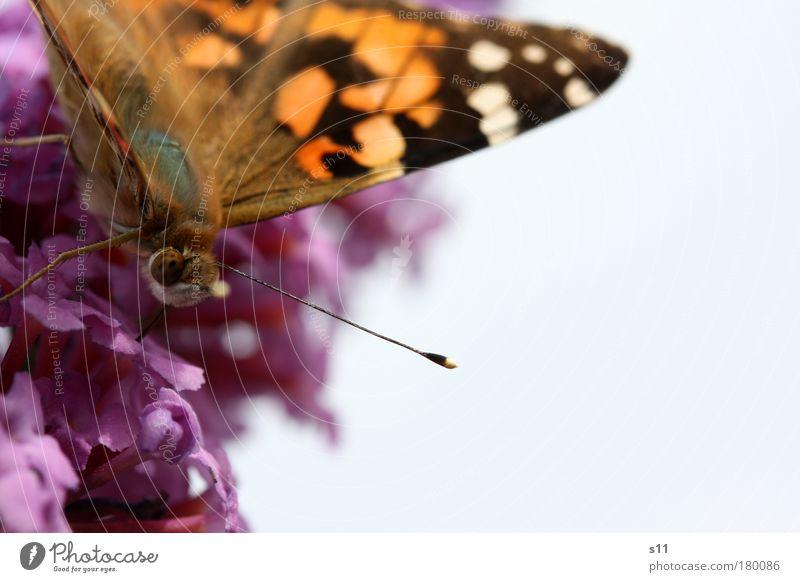 summer feeling Himmel Natur blau schön Pflanze Sommer Blume Tier schwarz Umwelt Herbst Gefühle Blüte Glück Park fliegen