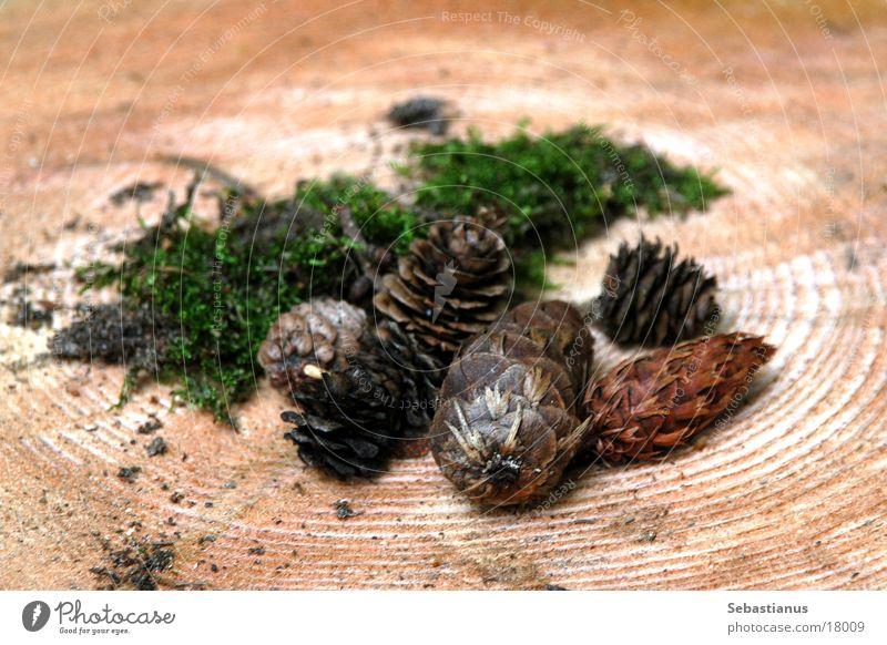 Waldfrüchte Baumstamm Tannenzapfen Waldfrucht