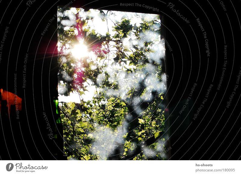 Morgens durch den Baum gegen die Sonne grün Freude Fenster Glück Denken Fröhlichkeit beobachten Unendlichkeit Warmherzigkeit Blühend Originalität Sonnenlicht