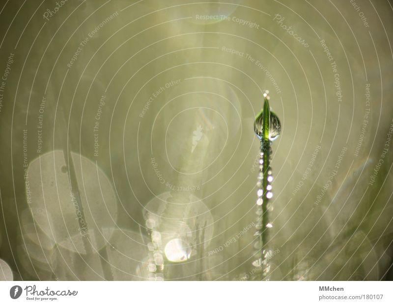 Tower Natur Pflanze Sommer Wasser Erholung Wiese Gras Regen glänzend Wassertropfen Klima Rasen Tropfen Kugel Halm Tau