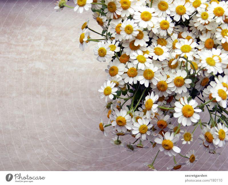 kleine blumensteckkunst. weiß schön gelb Holz grau Blüte Glück Gesundheit Blume Wohnung frisch Tisch Häusliches Leben Romantik Dekoration & Verzierung