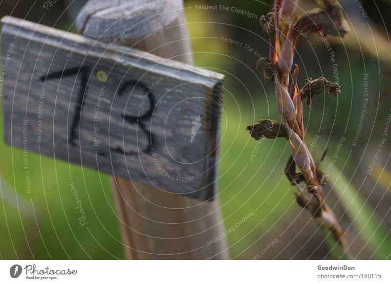 13 Pflanze ruhig Herbst Ziffern & Zahlen 13 Ordnungsliebe Holzschild