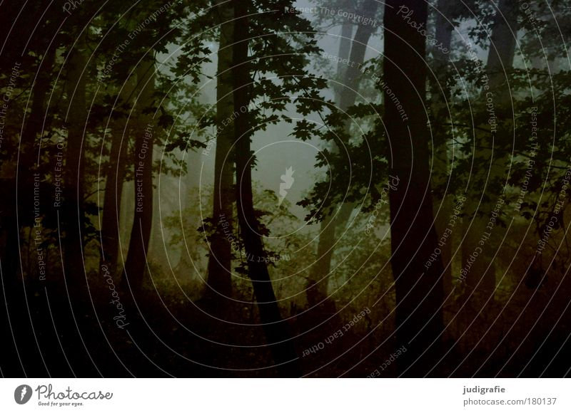 Morgens Farbfoto Außenaufnahme Morgendämmerung Umwelt Natur Landschaft Pflanze Herbst Klima Nebel Baum Wald dunkel Idylle Traurigkeit