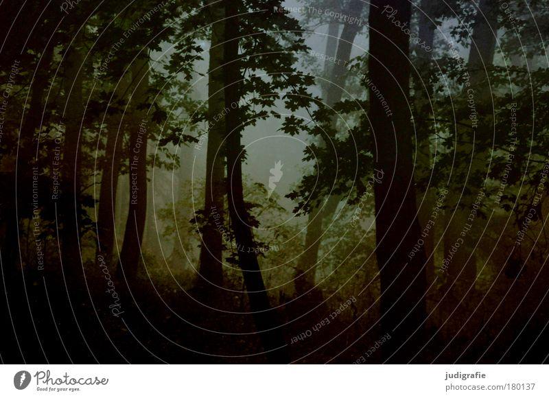 Morgens Natur Baum Pflanze Wald dunkel Herbst Traurigkeit Landschaft Nebel Umwelt Klima Idylle