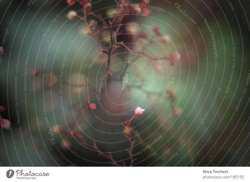 Unwirklich. Natur Wasser schön Pflanze Sommer Tier Blatt Umwelt Landschaft Herbst Bewegung Blüte träumen Park Stimmung frei
