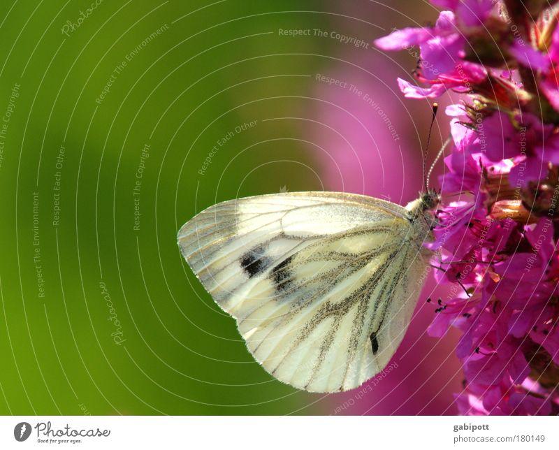 farbenfroh Natur weiß Blume grün Pflanze Sommer ruhig Blatt Tier Leben Blüte Landschaft Zufriedenheit rosa Umwelt ästhetisch