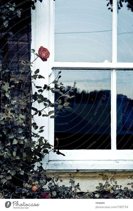 fensterrose Farbfoto Gedeckte Farben Außenaufnahme Menschenleer Tag Haus Einfamilienhaus Traumhaus Bauwerk Gebäude Mauer Wand Fassade Fenster blau rot Romantik