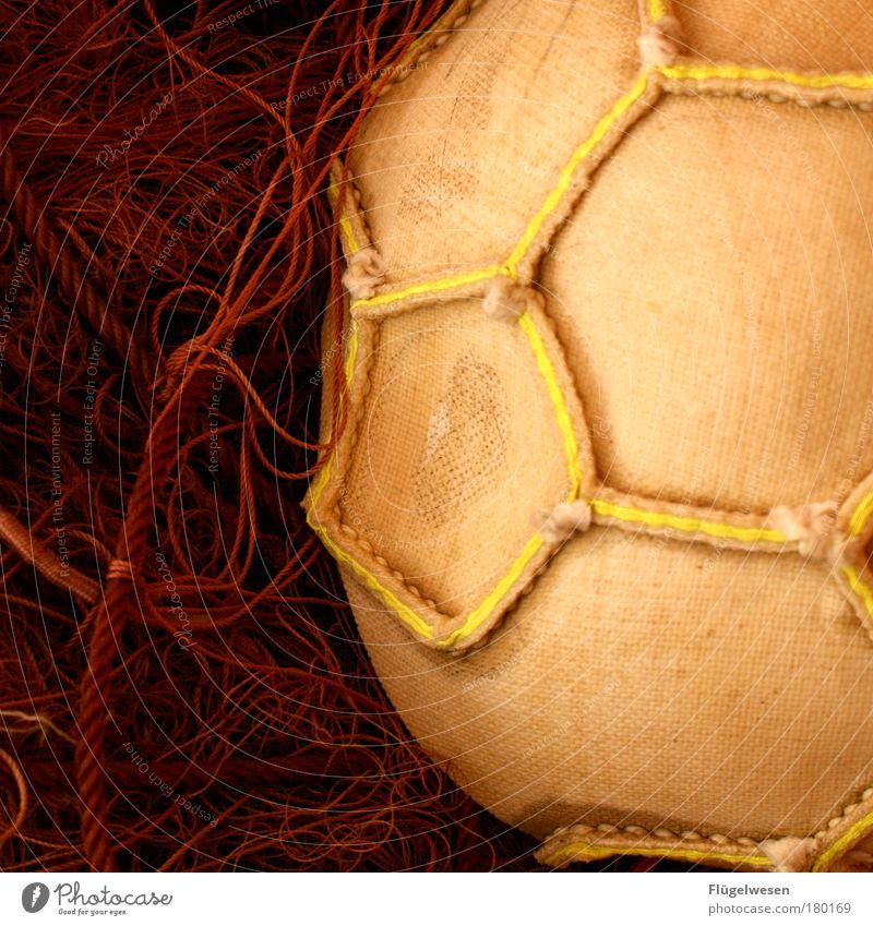 Wir sind wieder Wer im Ostfußball! Freude Sport Spielen Kraft Freizeit & Hobby Fußball Geschwindigkeit Erfolg Lifestyle Ball Netz Jagd Tor kämpfen Fan Sportler