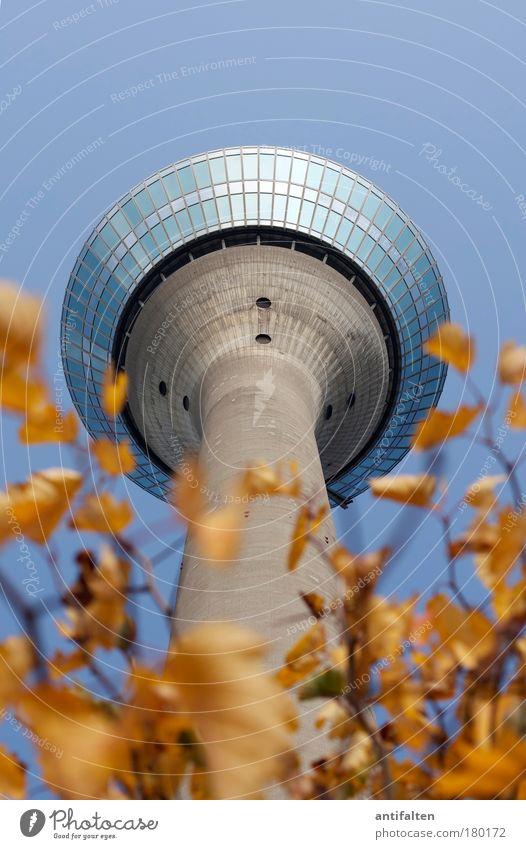 Herbstaussichten Natur Pflanze Himmel Wolkenloser Himmel Schönes Wetter Düsseldorf Deutschland Turm Rheinturm Sehenswürdigkeit Wahrzeichen hoch blau braun gelb