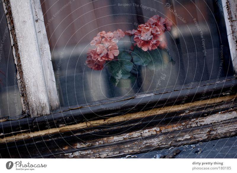 falsche Blumen Farbfoto Außenaufnahme Menschenleer Textfreiraum unten Tag Schatten Kunst Pflanze Rose Blüte Topfpflanze Kunstblume alt künstlich Schaufenster