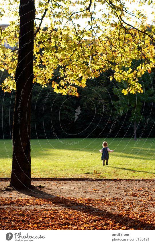 Zeitlos Spielen Ausflug Kind Kleinkind Mädchen Kindheit 1 Mensch 1-3 Jahre Natur Himmel Sonnenaufgang Sonnenuntergang Herbst Baum Gras Sträucher Blatt Park