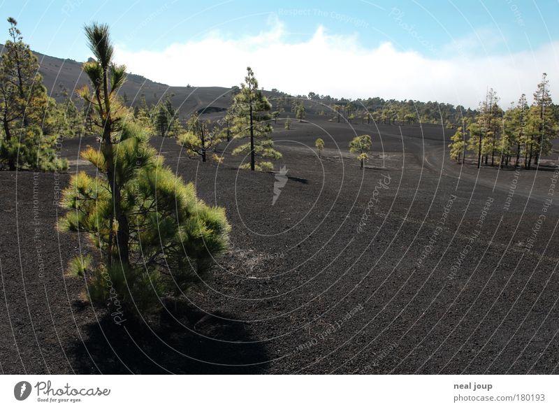 Mondlandschaft - 2 Himmel grün Baum Ferien & Urlaub & Reisen Wolken ruhig Einsamkeit schwarz kalt Freiheit Berge u. Gebirge Landschaft Luft Erde Insel Wachstum