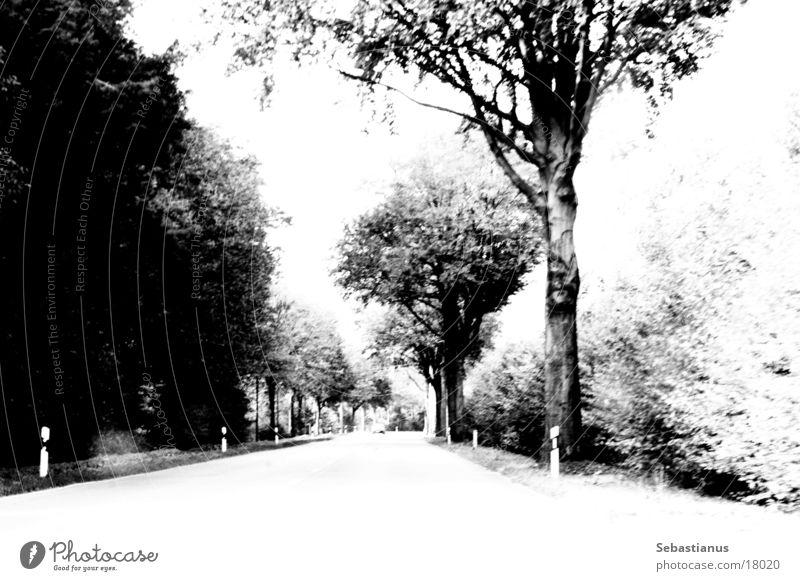 Geradaus, hinter der Kurve kommt Farbe Baum Landstraße Waldrand Niederrhein