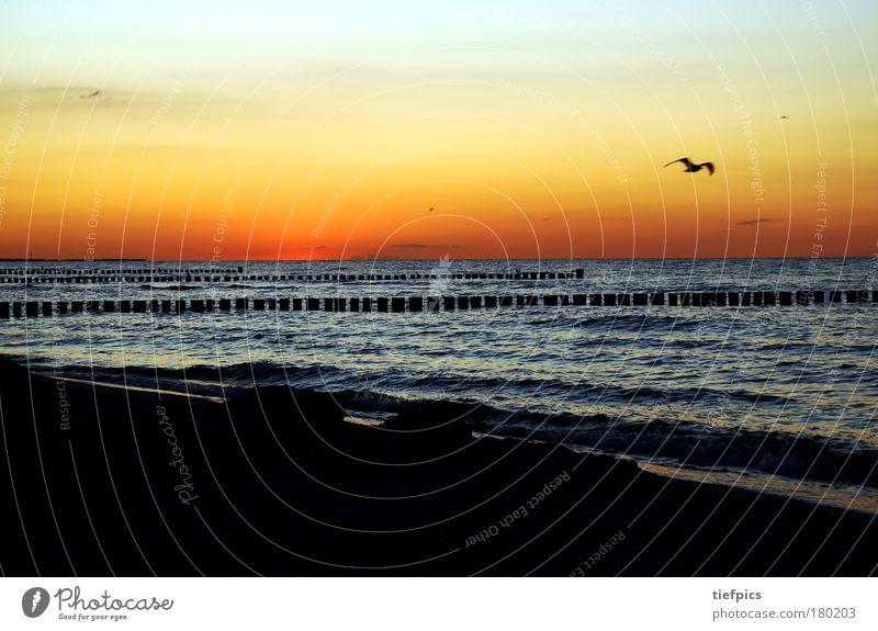 möwe allein an der ostsee Wasser Meer Sommer Strand Ferien & Urlaub & Reisen Einsamkeit Sand Stimmung orange Wellen Küste rosa Romantik Vogel Sonnenuntergang Dämmerung