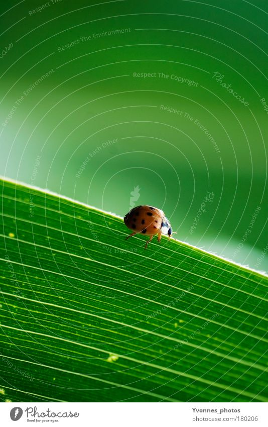 Käfer Farbfoto Außenaufnahme Totale Tierporträt Glück Sommer Umwelt Natur Pflanze Erde Frühling Gras Sträucher Blatt Grünpflanze Park Wiese Feld klein grün rot