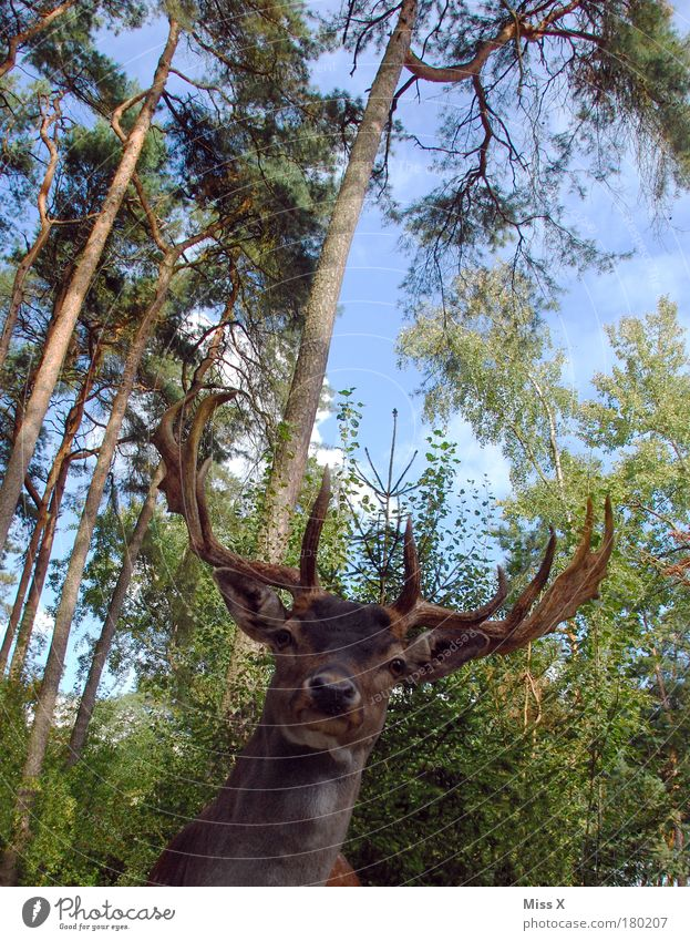 Jägermei**** für alle Außenaufnahme Nahaufnahme Menschenleer Textfreiraum oben Tag Licht Froschperspektive Oberkörper Blick Jagd Ferien & Urlaub & Reisen