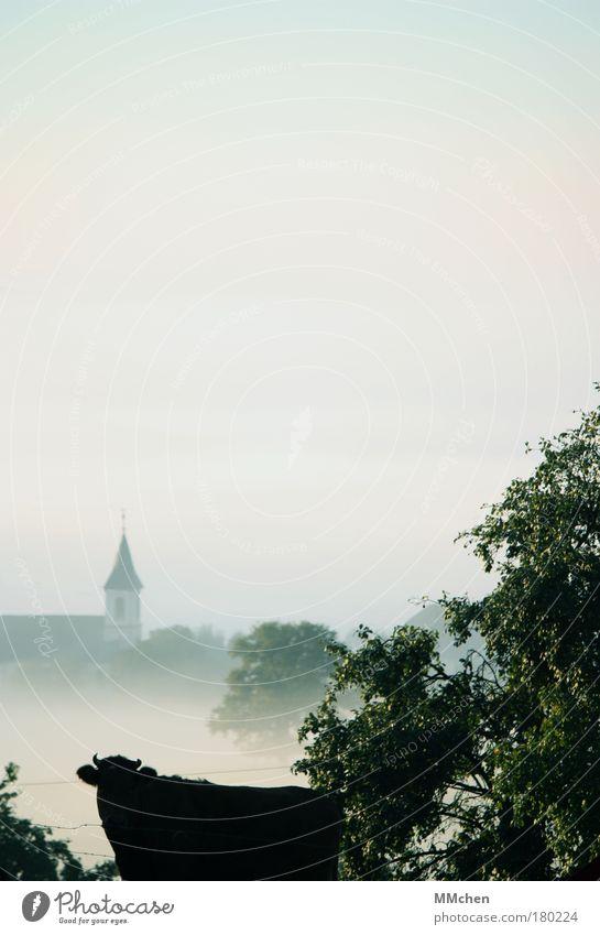 Eine Kuh macht muh Farbfoto Außenaufnahme Textfreiraum oben Morgen Umwelt Natur Landschaft Urelemente Herbst Klima Nebel Tier Nutztier 1 beobachten einzigartig