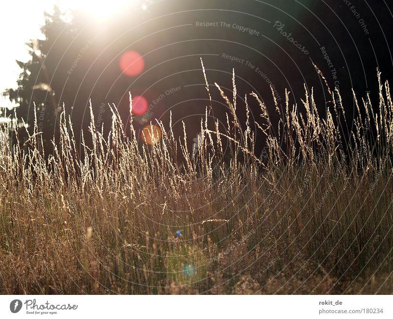 Auf der Wies`n Gedeckte Farben Außenaufnahme Menschenleer Textfreiraum oben Dämmerung Licht Kontrast Reflexion & Spiegelung Gegenlicht Froschperspektive