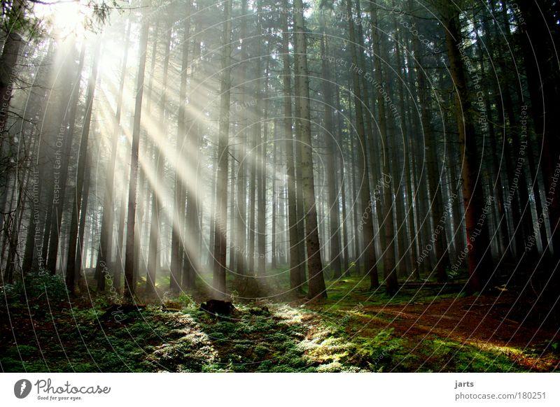 Anfang Natur schön Baum Sonne ruhig Einsamkeit Wald Erholung Freiheit Herbst Umwelt hell Morgendämmerung Zufriedenheit Sonnenstrahlen Nebel