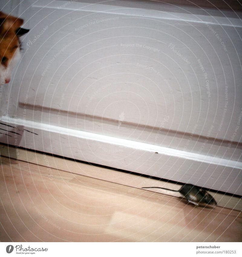 Tom & Jerry Katze Freude Tier Leben Freundschaft laufen rennen authentisch Häusliches Leben niedlich Jagd Stress Maus Fleisch Landraubtier