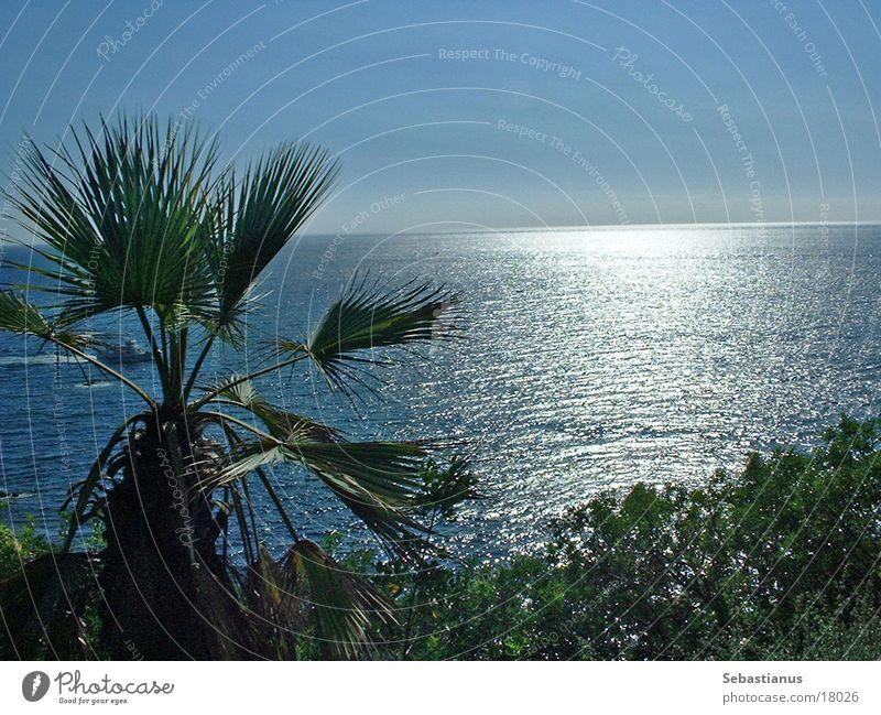 Ein Tag am Meer Palme Wellen Barcelona Spanien Garten Sonne