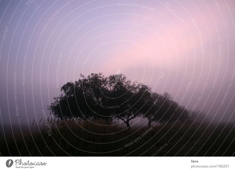 ein neuer Tag Natur Himmel Baum Pflanze ruhig Landschaft Stimmung Feld Nebel Urelemente Dunst Apfelbaum