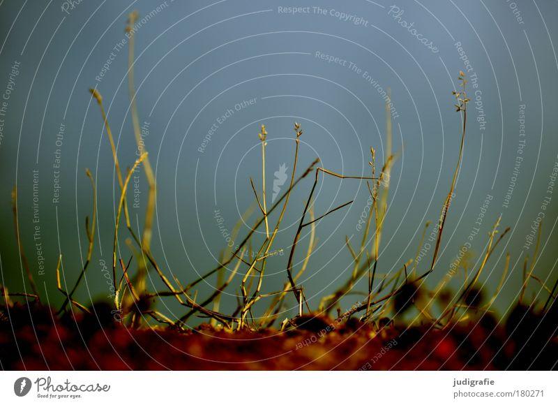 Gras Natur Himmel Pflanze klein Umwelt Erde Wachstum zart verblüht dehydrieren kümmerlich
