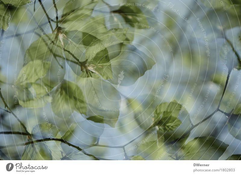 Sommerwald Kunst Umwelt Natur Pflanze Urelemente Himmel Frühling Klimawandel Schönes Wetter Baum Blatt Grünpflanze Wildpflanze Wald dünn fantastisch hell grün