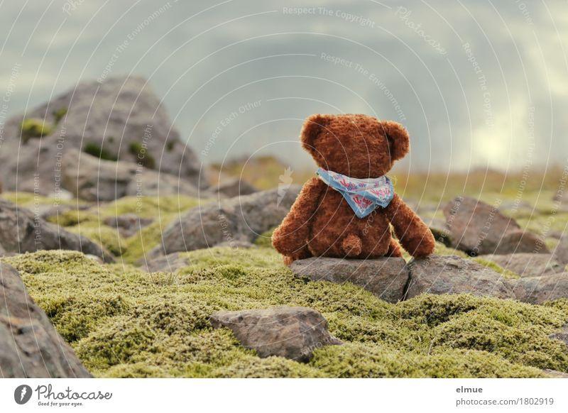 Teddy Per in Island (4) Ferien & Urlaub & Reisen Abenteuer Landschaft Moos Felsen Teddybär Stein Blick sitzen außergewöhnlich Glück kuschlig klein Stadt