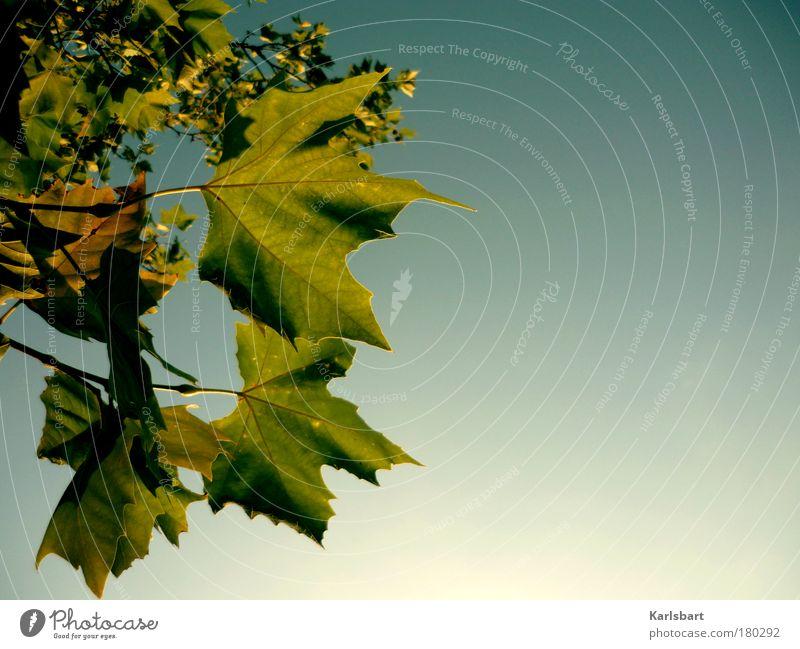 dialektik. himmel. Design Leben Wohlgefühl Freiheit Erntedankfest Gartenarbeit Umwelt Natur Himmel Herbst Baum Park hängen grün Bewegung Zufriedenheit Hoffnung