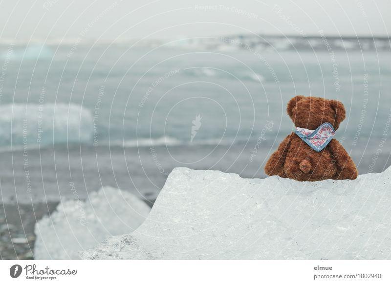 Teddy Per in Island (1) Ferien & Urlaub & Reisen Wasser Klimawandel Sturm Eis Frost Küste Jökulsalon Gletschersee Gletschereis Gletscherschmelze Spielzeug