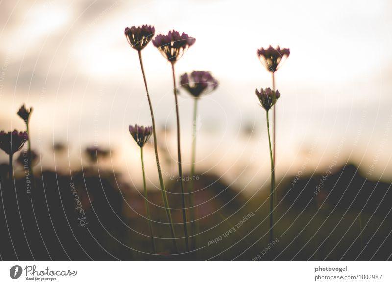 weiches Licht, zarte Blüten Umwelt Natur Pflanze Herbst Freundlichkeit braun Gefühle Glück Zufriedenheit Lebensfreude schön friedlich geduldig ruhig Farbfoto