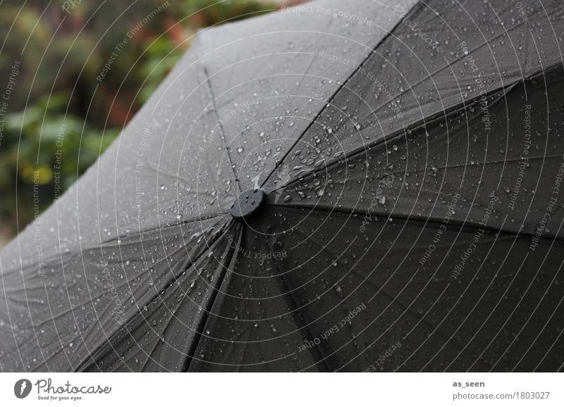 Herbstwetter Halloween Trauerfeier Beerdigung Umwelt Natur Wasser Wassertropfen Klima Klimawandel Wetter schlechtes Wetter Unwetter Regen Tropfen glänzend
