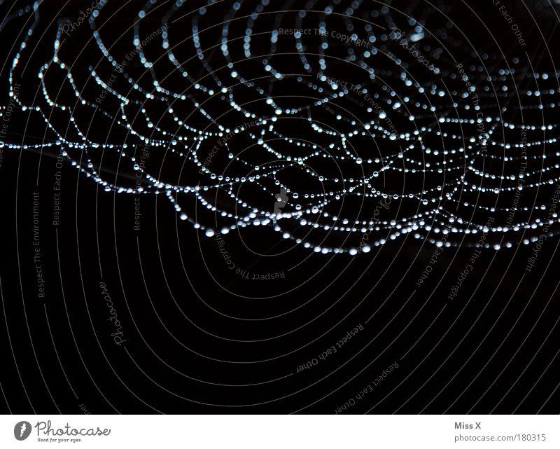 Perlenkette Natur Wasser kalt Herbst Traurigkeit Regen glänzend Umwelt Wassertropfen nass frisch Netzwerk Telekommunikation Klima Schmuck Spinne