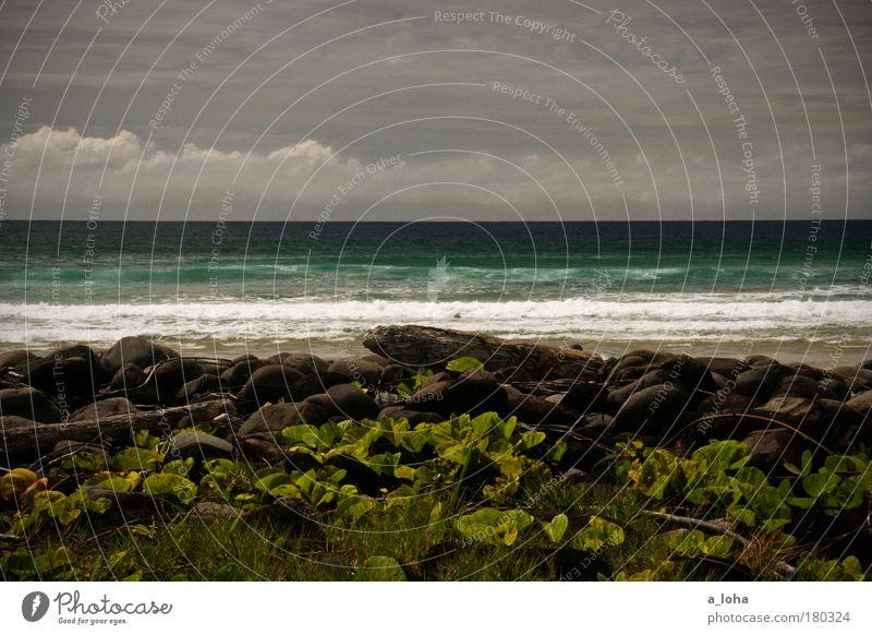 1000 miles away Natur schön Pflanze Sonne Strand Meer Ferien & Urlaub & Reisen Wolken ruhig Einsamkeit Landschaft Stein Küste Wetter Wellen Horizont