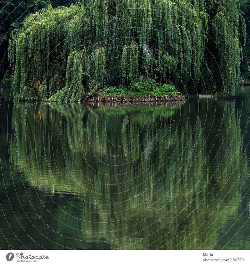 Spieglein, Spieglein Umwelt Natur Landschaft Pflanze Wasser Sommer Baum Weide Trauerweide Park Seeufer Teich Wachstum natürlich grün Stimmung Romantik ruhig