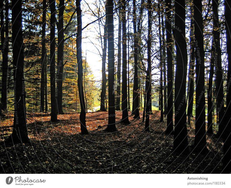 IIIIIIII Umwelt Natur Landschaft Pflanze Erde Himmel Sommer Wetter Schönes Wetter Baum Blatt Wald Holz dehydrieren Wachstum hell hoch braun grün schwarz weiß