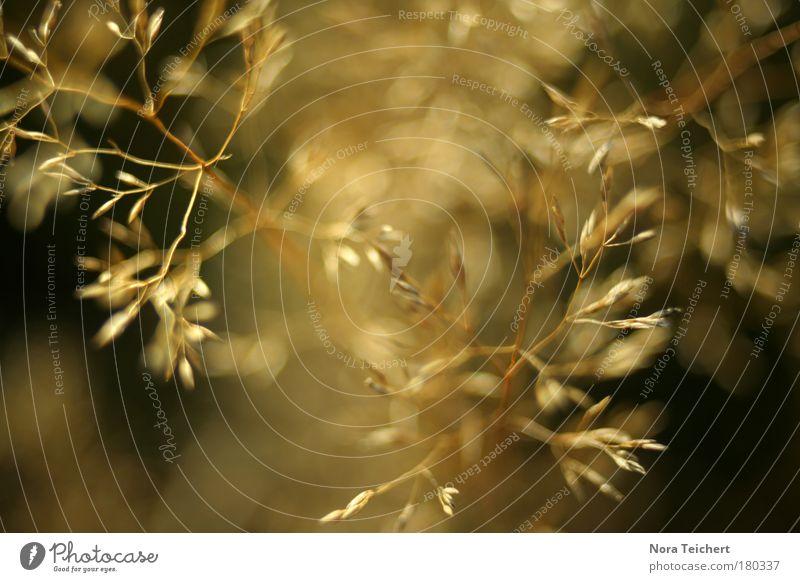 Im Goldrausch. Farbfoto Gedeckte Farben Außenaufnahme Nahaufnahme Detailaufnahme Makroaufnahme Experiment abstrakt Menschenleer Textfreiraum unten Abend