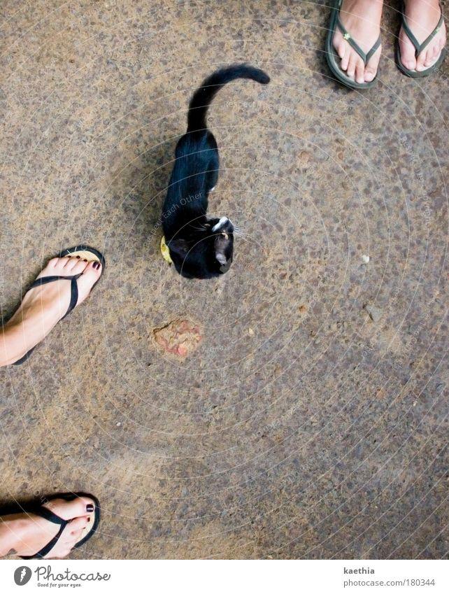umzingelt! Frau Mensch Sommer schwarz Tier feminin Spielen Fuß Katze Schuhe Fröhlichkeit stehen beobachten natürlich Vogelperspektive Neugier