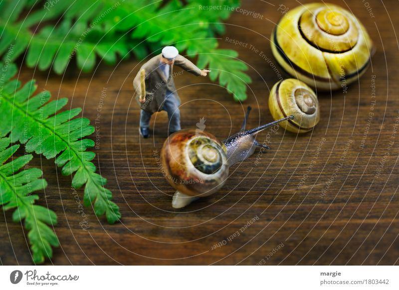 Miniwelten - Geh sofort zu den anderen! Mensch maskulin Mann Erwachsene 1 Blatt Tier Wildtier Schnecke 3 braun gelb grün Schneckenhaus Spirale Fühler Stock