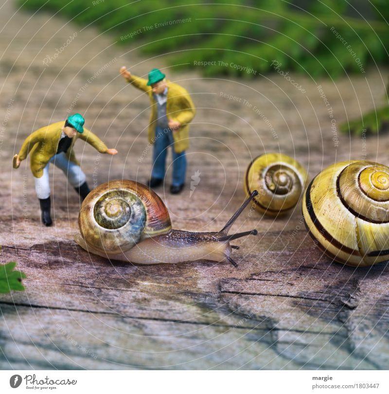 Miniwelten - Wirst du wohl... Mensch maskulin Mann Erwachsene 2 Tier Wildtier Schnecke 3 schreien gelb grün Schneckenhaus Schneckenschleim Spirale schlagen