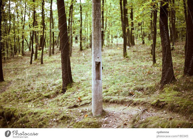 Baum unter Bäumen Farbfoto Außenaufnahme Detailaufnahme Menschenleer Tag Licht Schatten Kontrast Schwache Tiefenschärfe Zentralperspektive Umwelt Natur
