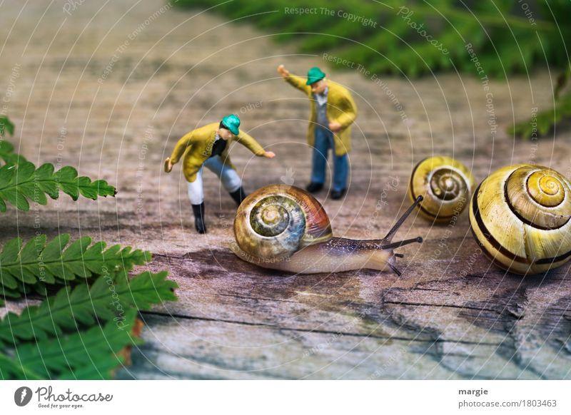 Miniwelt - Schnecken Erziehung Mensch maskulin Mann Erwachsene 2 Pflanze Blatt Tier Nutztier Wildtier 3 gelb grün Querformat Miniatur Körper Farn Landwirt Stock