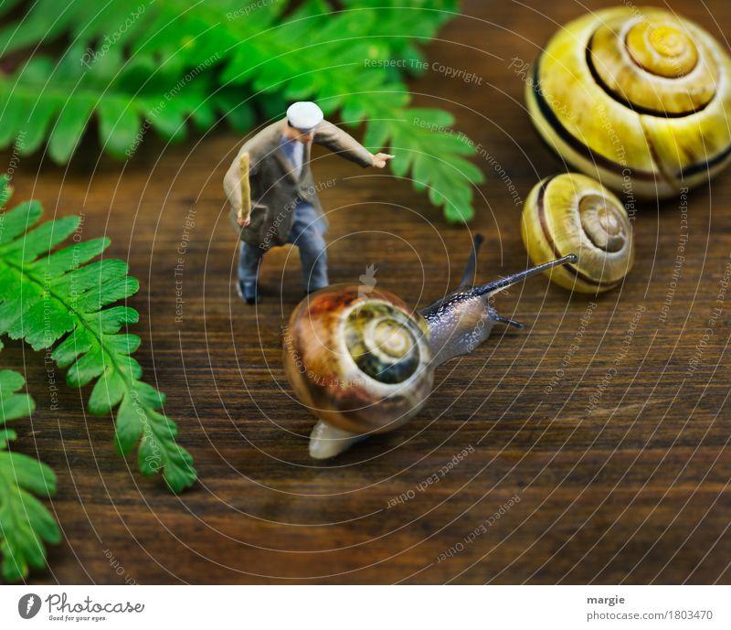 Miniwelten - Der Antreiber Mensch maskulin Mann Erwachsene 1 Pflanze Farn Blatt Tier Nutztier Wildtier Schnecke Tiergesicht 3 braun gelb grün Quadrat