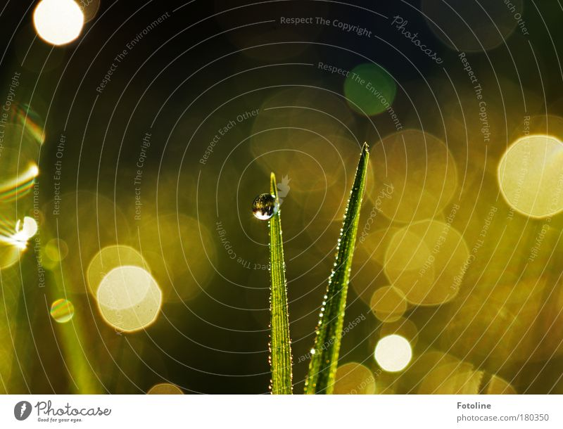 Morgentau Farbfoto mehrfarbig Außenaufnahme Tag Licht Reflexion & Spiegelung Sonnenlicht Sonnenstrahlen Umwelt Natur Landschaft Pflanze Wasser Wassertropfen