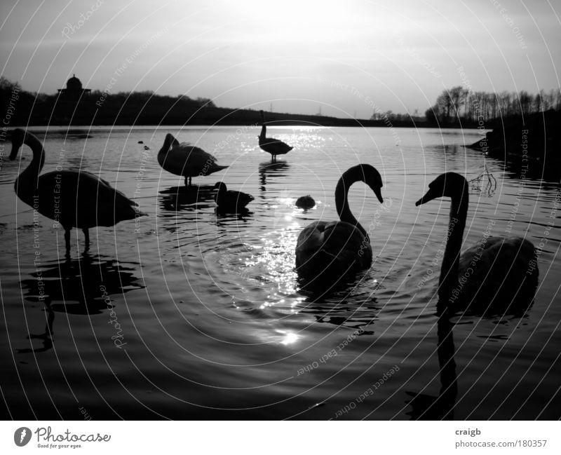 Schwenken umher Schwarzweißfoto Außenaufnahme Menschenleer Tag Silhouette Reflexion & Spiegelung Gegenlicht Natur Landschaft Tier Wasser Himmel Seeufer Teich