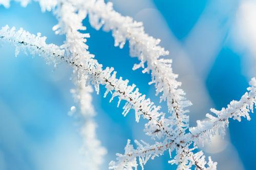 Winterzauber blau weiß kalt Hintergrundbild außergewöhnlich hell glänzend Eis Vergänglichkeit Stern (Symbol) Frost gefroren bizarr filigran Eiskristall