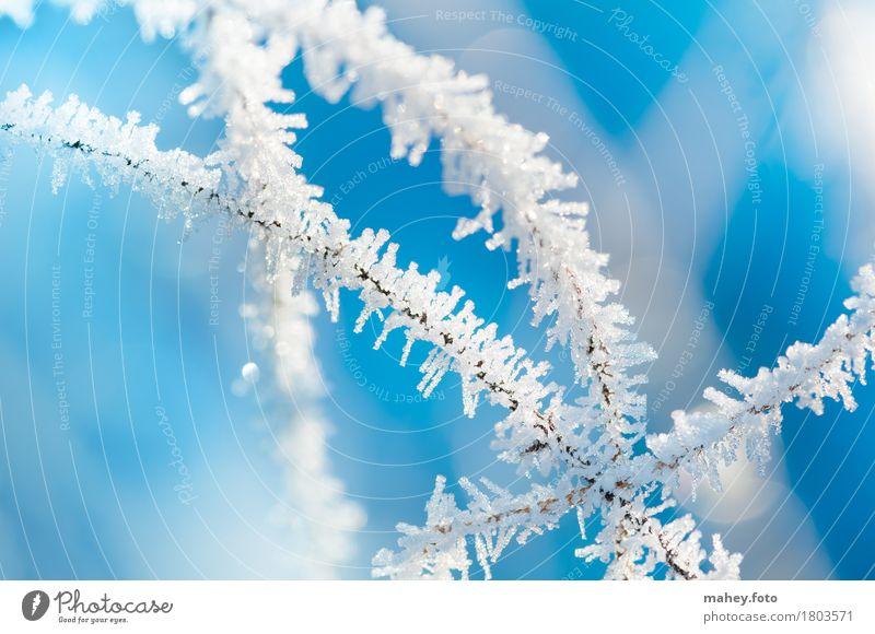 Winterzauber Eis Frost glänzend außergewöhnlich hell kalt blau weiß bizarr Vergänglichkeit Eiskristall Hintergrundbild Naturphänomene Raureif Stern (Symbol)