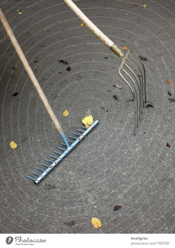Nix zu tun! Farbfoto Gedeckte Farben Außenaufnahme Menschenleer Textfreiraum rechts Textfreiraum unten Tag Dienstleistungsgewerbe Herbst Blatt Garten Rechen